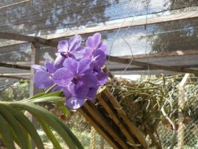 0248 Jardin Botanico St Cruz