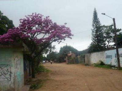 0593 Hacia la Quinta. Plan 3000. Tajibo rosa. St Cruz