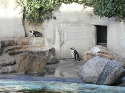 0821 Artis-Zoo