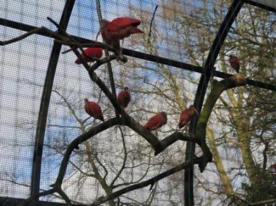 0849 Artis-Zoo