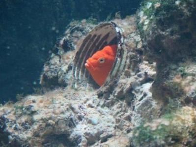 0899 Artis-Zoo-Aquarium