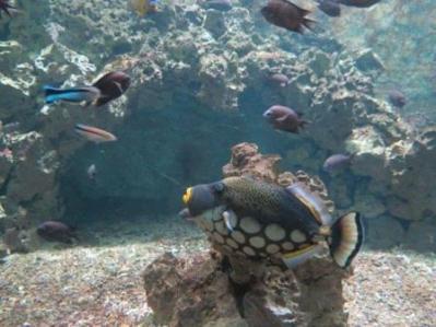 0920 Artis-Zoo-Aquarium